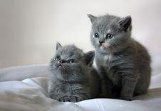 Free Kittens Stock Image - 5732981