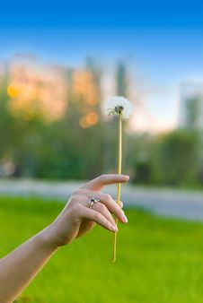 Free Dandelion In Girl S Hand Royalty Free Stock Image - 5733246