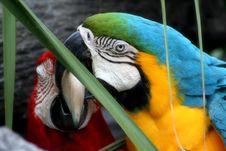 Free Love Of Birds Royalty Free Stock Image - 5733436