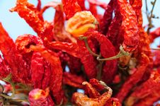 Free Red Peppers Stock Photo - 5734060