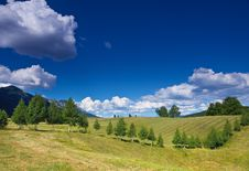 Free Rural Landscape With A Row Of Birches Stock Images - 5734174