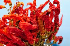 Free Red Peppers 2 Stock Photography - 5734192
