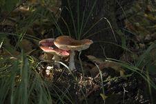 Free Mushroom Stock Photo - 5734320