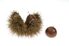 Free Chestnuts With Husk Stock Image - 5734631