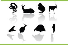 Free Vector Animals Collection Royalty Free Stock Photos - 5734638