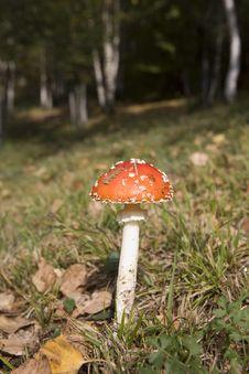 Free Mushroom Stock Photo - 5734760