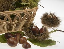 Free Small Basket With Chestnuts And Husks Royalty Free Stock Images - 5735099