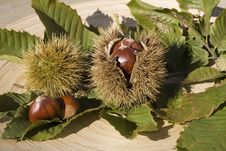 Free Chestnuts With Husks Royalty Free Stock Photography - 5735127