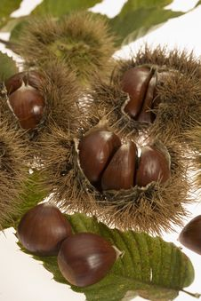 Free Chestnuts With Husks Royalty Free Stock Images - 5735319