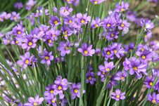 Free Purple Flowers Stock Image - 5735411