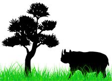 Free Rhinoceros Royalty Free Stock Photos - 5735438