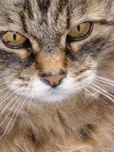 Free Animal Royalty Free Stock Image - 5736006