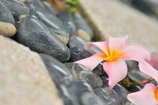Free Spa Zen Stock Photos - 5736633