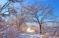Free Snow Scene Stock Images - 5736704