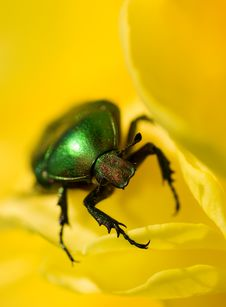 Green Bug Stock Photography