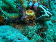 Purple Tube Sponge Stock Photo
