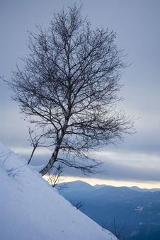 Free Winter Snow Stock Photography - 5737512