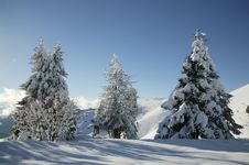 Free Winter Snow Royalty Free Stock Photography - 5737577