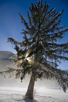 Free Winter Snow Royalty Free Stock Photo - 5737645