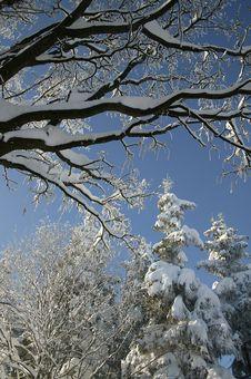 Free Winter Snow Royalty Free Stock Photo - 5737655