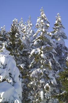 Free Winter Snow Royalty Free Stock Photo - 5737775