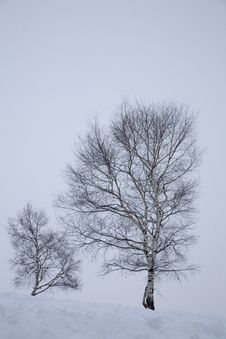 Free Winter Snow Stock Photo - 5737850