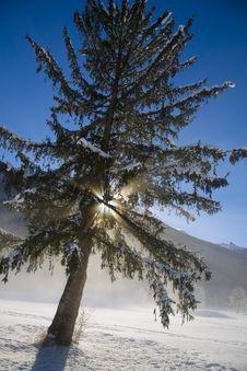 Free Winter Snow Stock Image - 5737861