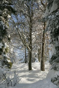 Free Winter Snow Royalty Free Stock Images - 5737879