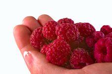 Free Handfull Of Rasberries Stock Image - 5737921