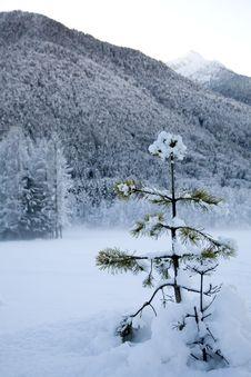 Free Winter Snow Royalty Free Stock Photos - 5738048