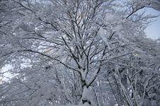 Free Winter Snow Royalty Free Stock Photos - 5738158