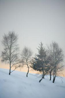 Free Winter Snow Royalty Free Stock Image - 5738206