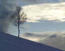 Free Winter Snow Royalty Free Stock Photo - 5738255