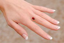 Free Ladybug Royalty Free Stock Photography - 5738297