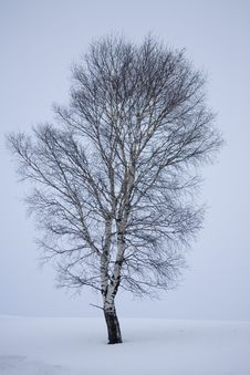 Free Winter Snow Royalty Free Stock Photography - 5738327