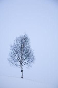 Free Winter Snow Royalty Free Stock Photo - 5738405