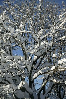 Free Winter Snow Stock Image - 5738451