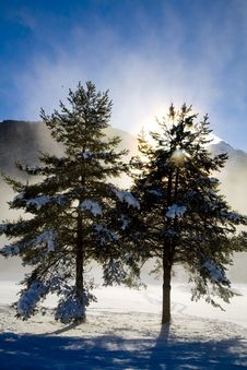 Free Winter Snow Royalty Free Stock Images - 5738539