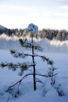 Free Winter Snow Stock Photos - 5738603