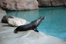 Free California Sea Lion Stock Image - 5738831
