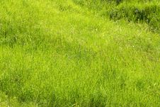 Free Green Summer Grass Royalty Free Stock Photo - 5738895