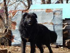 Free Black Dog. Stock Image - 57371351