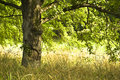Free Smiling Tree In The Summer Royalty Free Stock Images - 5741169