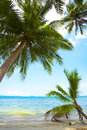 Free Exotic Stock Image - 5746701