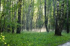 Free Morning Forest Royalty Free Stock Photography - 5740407