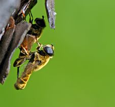 Free Two Insects Making Love On A Tree Stock Photo - 5740600