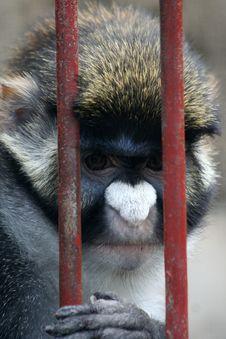 Monkey Stock Photo
