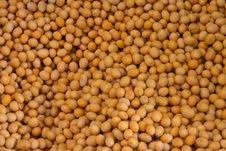 Free Beans Royalty Free Stock Photos - 5742868