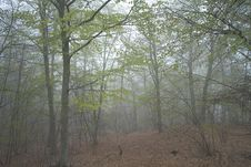 Free Inside A Forest Royalty Free Stock Photo - 5743435