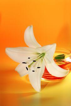 Free White Lily On Yellow. Royalty Free Stock Photo - 5744375